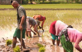 कोरोनाले सिकाएको पाठः कृषि नै खास (फोटोफिचर)